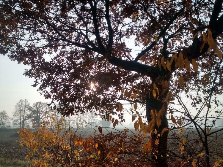 Tree Autumn Autumn Colors Autumn Leaves Beauty Nature_collection EyeEm Nature Lover Landscape Nature TreePorn