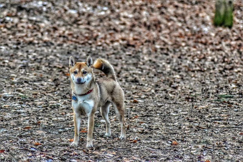Animal Themes One Animal Mammal Day No People Domestic Animals Feline Animals In The Wild Nature Dog Close-up Pets Outdoors