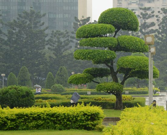 Chiang Kai-shek Memorial Hall The Week On EyeEm Day Green Color Growth Outdoors Plant Taipe Photography Tree