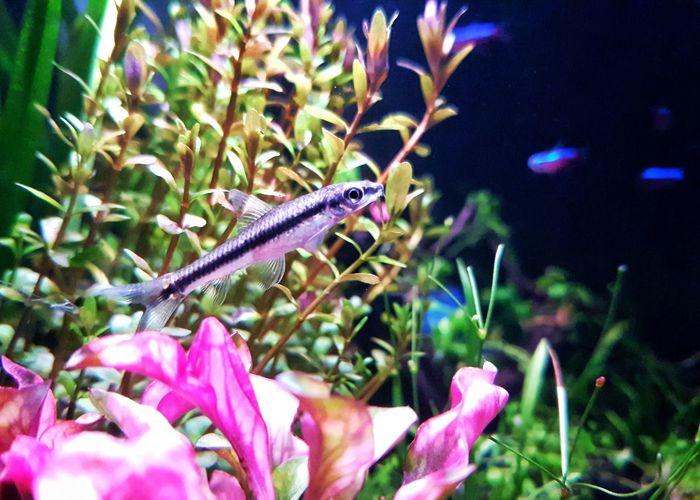 Green Color Aquarium Underwater Samsung Galaxy S7 Edge Aquarium Life Nano Fish Aquarium Photography Phonegraphy Nanotank Aquatic Plants Swimming Nature Beauty In Nature Plant EyeEm Ready