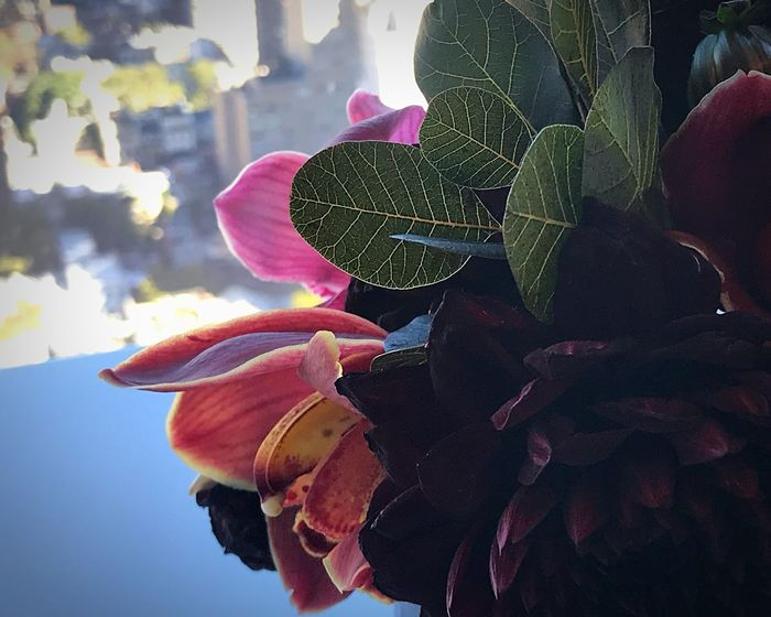 Leaf Outdoors Day Nature Growth Plant Close-up Freshness Beauty In Nature Flower No People Sky Depth Of Field Bloomberg Building Bouquet Sunlight Indoors  Blooming Pink Color Petal Fragility