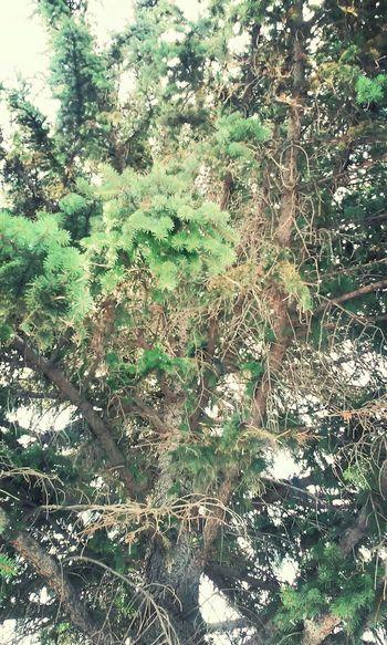 Treescape Nature Photography Whatdoyouthink💭 Random