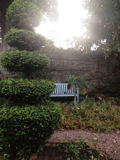 Peaceful bench Blue Peaceful Garden Bench Tranquility