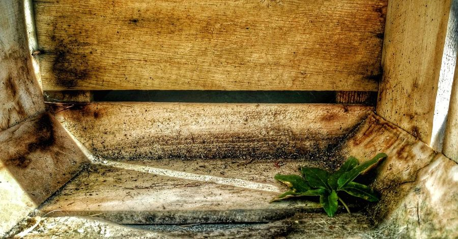 Wood - Material Sunlight No People Outdoors Nature Close-up Beauty In Nature EyeEm Nature Lover Photo♡ Sony Xperia M5 Nature Photography Taking Photos Springtime