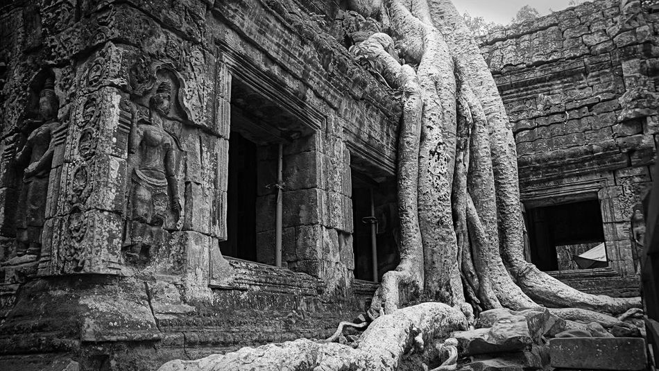 This is the place where Lara Croft (Tomb Raider) was filmed. Since i saw it then, i always dream to be on it. I finally did. Tree Temple Tombraider Lara Croft Film Location Film MOVIE Scene Black & White Angkor Wat Cambodia Tomb Raider  Bnw B&w Street Photography My Best Photo 2015 The Great Outdoors With Adobe Fresh On Eyeem  Blackandwhite Photography Black And White The Great Outdoors - 2016 EyeEm Awards Cinema In Your Life Nature's Diversities