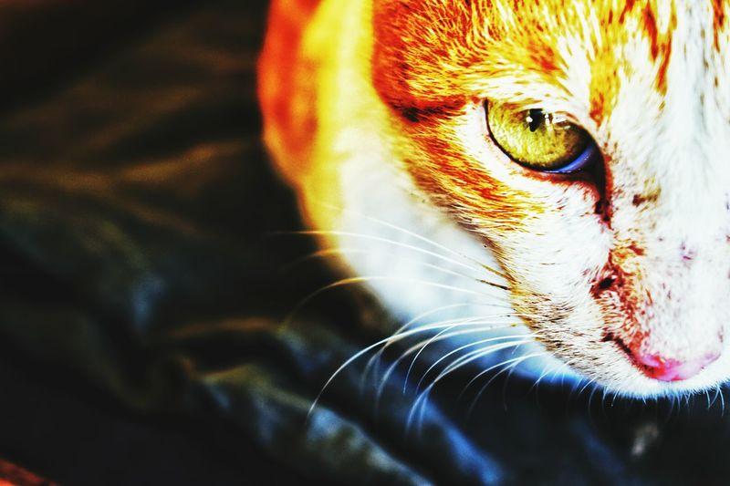Cat Cat♡ Cat