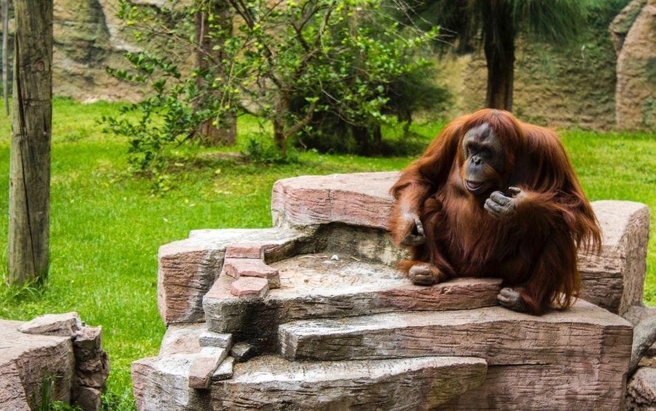 Leon Guanajuato Zoo Animals Naturaleza🌾🌿 Vida