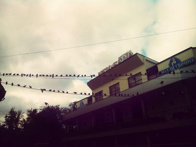 Так накорми голубей крохами своей души...