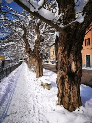 Snow Winter Cold Temperature Tree Nature Outdoors Day Beauty In Nature Tree Trunk Sky No People