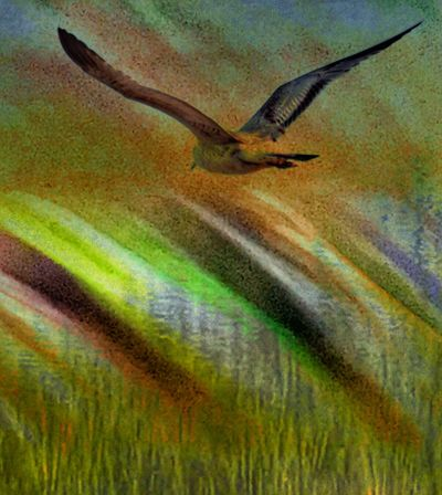 SEAGULL IN FLIGHT Waves Of Color Crashing In Double Exposure Mistakes Are Beautiful One Animal Animal Themes Wildlife Animals In The Wild No People Nature Green Color Close-up