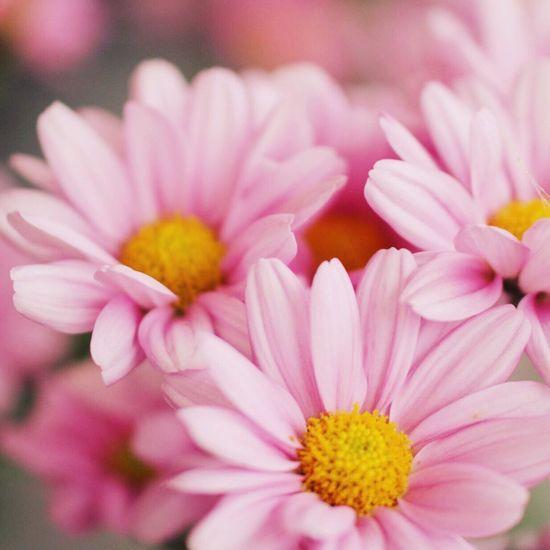 Good night. Canon70d Canon Flowers