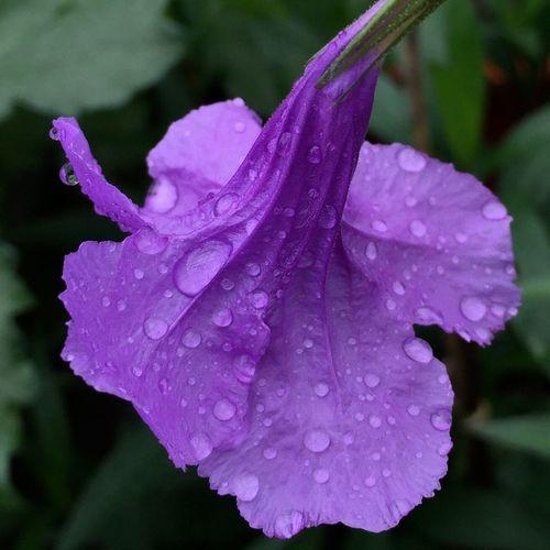 花卉 花与水珠