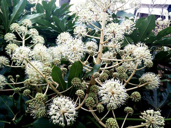 Beauty In Nature Relaxing Enjoying Life Enjoying The Sun ☀ Colour Of Life Flowers Misty Morning Wet Pivitol Ideas Flowers In Garden Fluffy Flowers