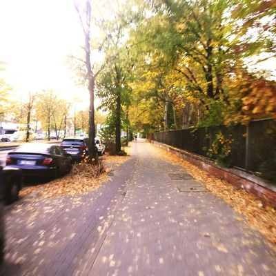 Bike Commute Tree Autumn Road Sunlight Sky Diminishing Perspective Pathway Vehicle Treelined Tranquil Scene