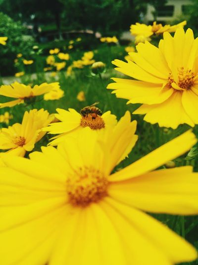 Bee😘😘 Flower