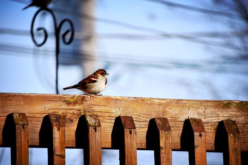 EyeEm Selects Animal Bird Animal Themes Animal Wildlife Vertebrate Wood - Material Animals In The Wild One Animal Fence Perching Day Sky