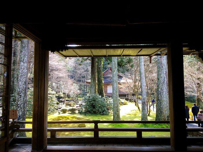 三千院 大原 Kyototravel Kyoto,japan Tranquil Scene Travel Destinations Japanese Temple Japan Photography Tree Window Day Architecture Built Structure Indoors  No People Nature