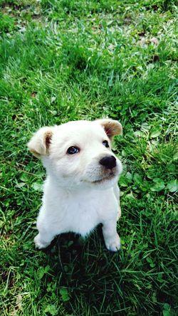 One Animal Dog Grass Animal Themes No People Nature Puppy Friendship Pets Grass Domestic Animals малыш щенок Almaty маленький друг Young Animal Outdoors Day