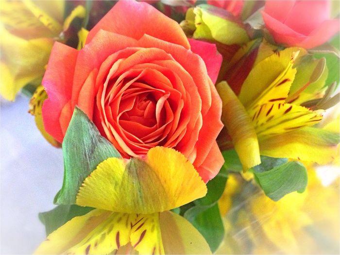 A Rose is a Rose Urban Nature Taking Photos Enjoying Life