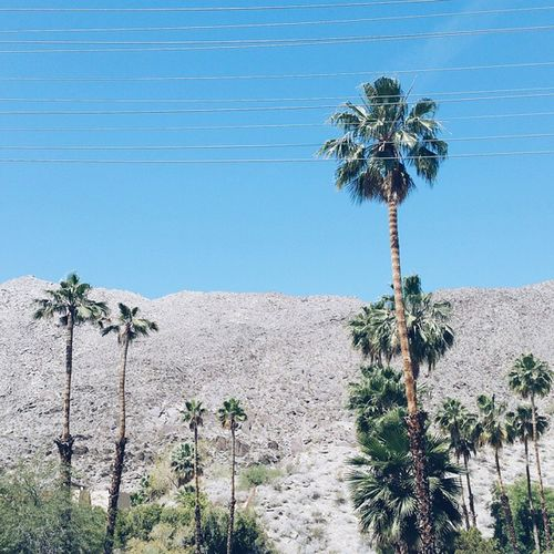 🎶 Palm trees are growing and a warm breezes a blowing I picture myself right there 🎶 || California Californiadreaming Palmsprings Nature dessert namethattune travel