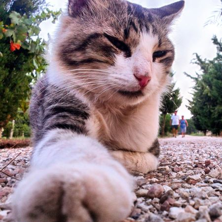 Taking Photos Hello World From My Point Of View Sweety Cat Relaxing Captured Moment Cats