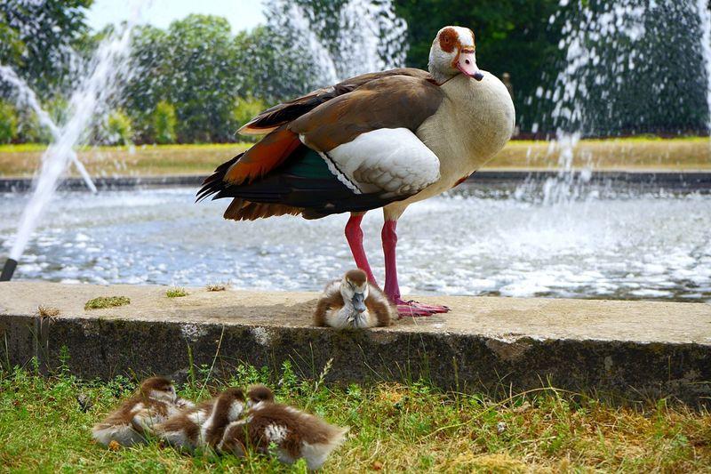 Sweet ducks