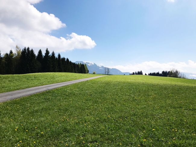 Grass Nature Tranquil Scene Tranquility Mountain Beauty In Nature Scenics Sky Green Color Growth Tree Landscape Field Outdoors Day No People Mountain Range Road