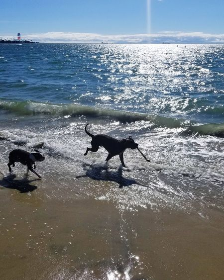 Sea Horizon Over Water Nature Animals In The Wild No People Beauty In Nature Outdoors Animal Wildlife Beach Day Water Sky Animal Themes Swimming Sea Life Mammal Leisure Activity Sunlight Relaxation Blessed & Thankful :) Beauty In Nature Palm Tree Tranquility Dog Pets
