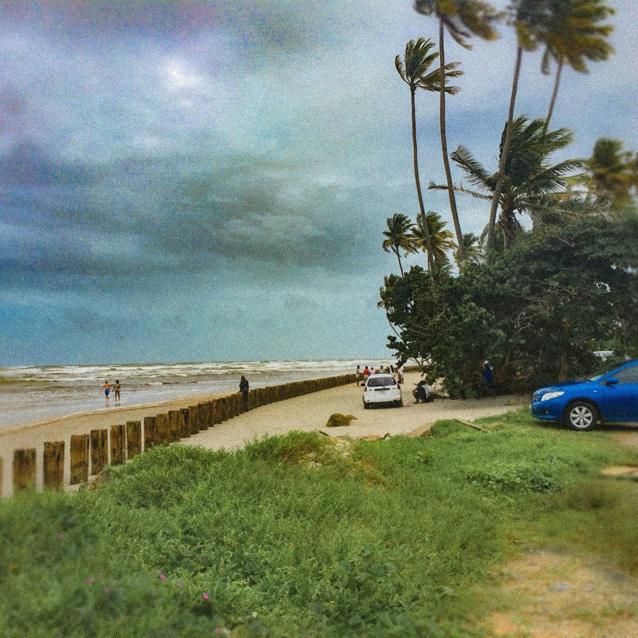 car, cloud - sky, sky, nature, day, tree, transportation, grass, outdoors, scenics, land vehicle, water, beach, tranquility, beauty in nature, landscape, no people, palm tree, sea, horizon over water