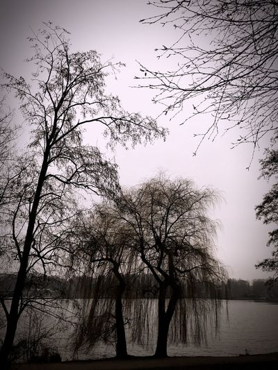 Trees Winter Lake Beautiful Place ♥ Lets Take A Walk Early Morning Fog... Cloudy Day No Leaves On Tree Gloomy Day Nature