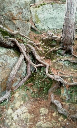 Bluff Climbing Nature Life Love Spirit Hiking Roots Feel Good Healthy