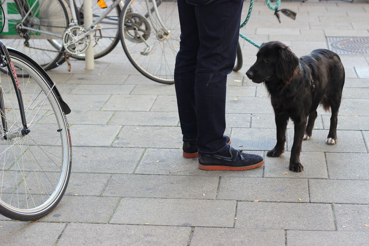 Waiting Dog Street Vienna Body Part Friends Friendship Waiting Bycicle Looking Looking Down Trust Street Portrait Animal Animal In The City Outdoors