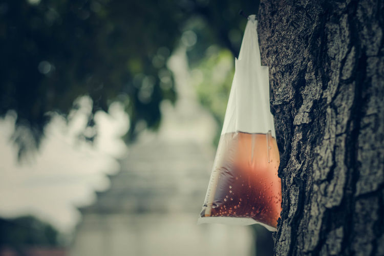 Close-Up Of Drink In Plastic Bag Hanging On Tree Trunk