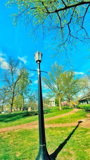 Sky Blue Tree No People Low Angle View Outdoors Day Lighting Equipment Park Brick Sidewalks Lexington Kentucky  Springtime Neighborhood Map Lexington KY Sommergefühle The Week On EyeEm Colour Your Horizn Summer Exploratorium