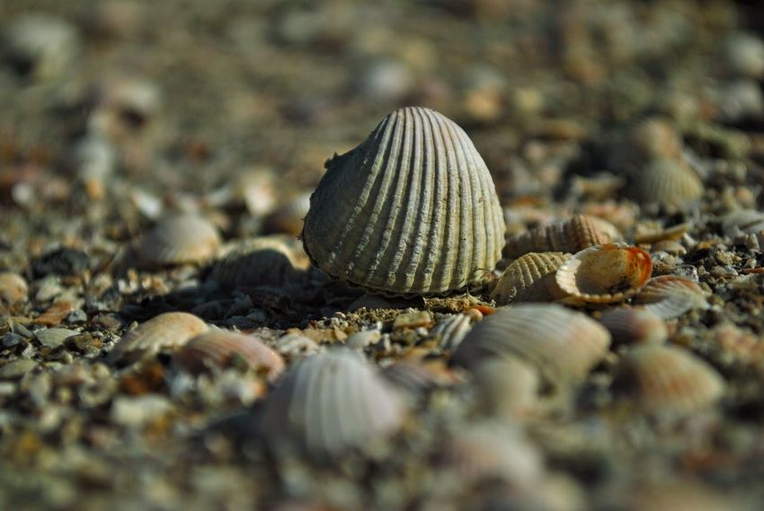 Out of the box CORFU ISLAND Holiday Acorn Animal Shell Animal Themes Animals In The Wild Beach Beauty In Nature Close-up Corfu Day Fragility Gastropod Nature No People Outdoors Sea Sea Life Seashell Selective Focus Snail Summer Summervibes Vacation Valentinamilkovics
