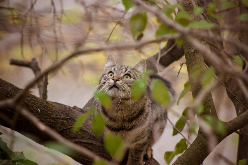 #cat #cat #cute #love #CatEyes Animal Themes Animals In The Wild Close-up Nature No People One Animal Outdoors Tree