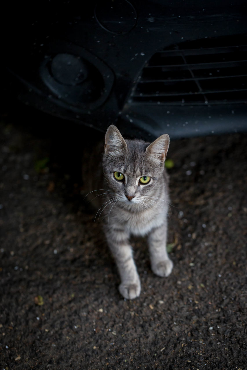 High Angle Portrait Of Cat Sitting By Car