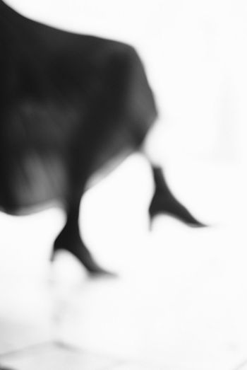 Close-up of cat over white background