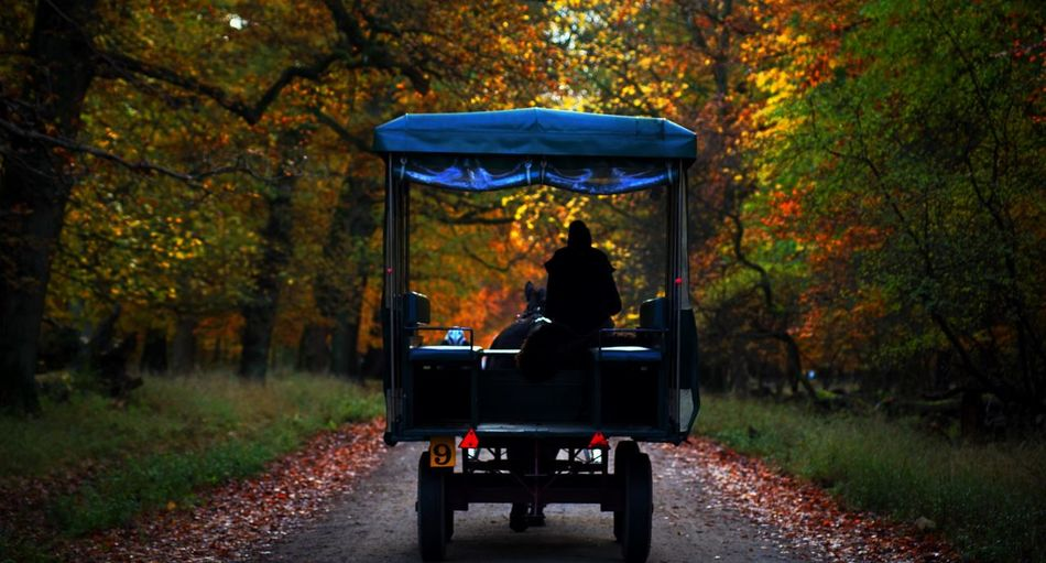 Rear view of silhouette person sitting in horse cart at park during autumn