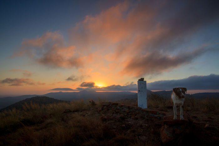 Beauty In Nature Cloud - Sky Dog Grass Landscape Mountain Nature Oppieberg RustenBurg Sky South Africa Sunrise