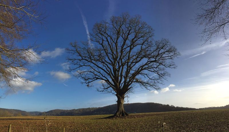 Let England Shake Oak Wye Valley Herefordshire Bare Tree Sky Nature Tree Beauty In Nature Tranquility Tranquil Scene Landscape Outdoors Scenics Branch Field No People Lone Isolated Day Winter Winter Sun