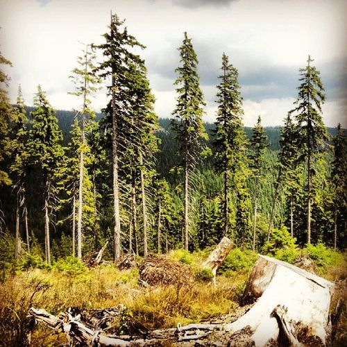 Wood Trip Malamoravka Karlov lostinwoodnatureawesome