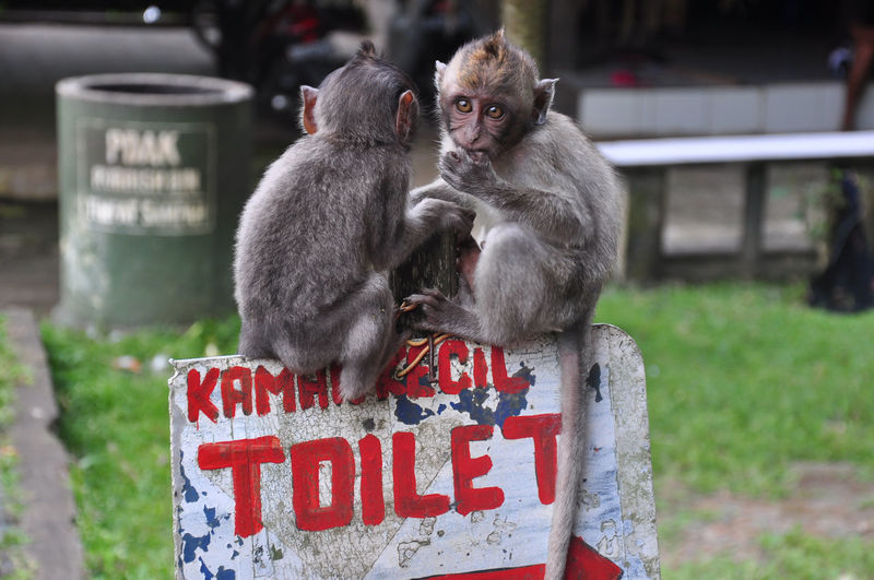 Young Monkeys Sitting On Toilet Sign