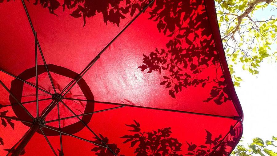 Beach Umbrella Parasol Chinese Shadow Chinese Shadows Shadow Shadows Shadows & Lights Tree Red Hanging Branch