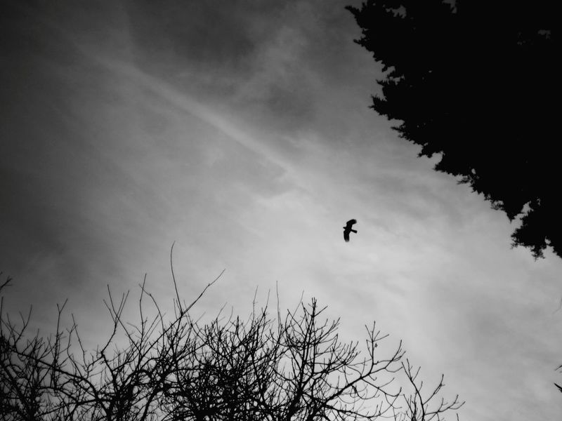 12MP Birds Nature On Your Doorstep Capturing Freedom Shades Of Grey Black And White