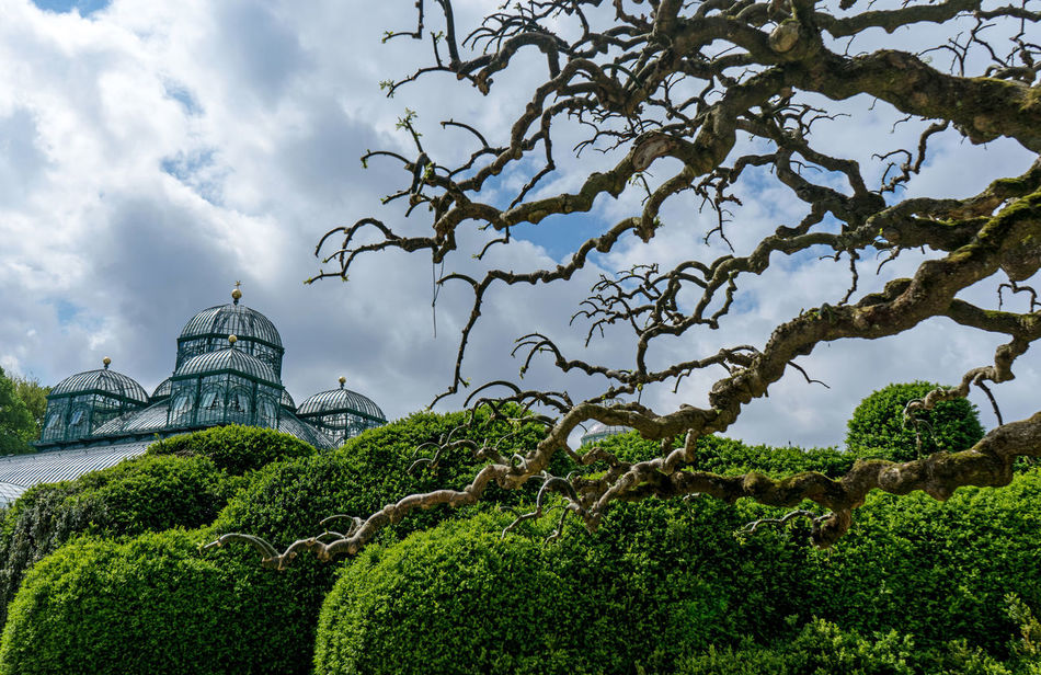 Serres De Laeken (Brussels). Architecture Beauty In Nature Branch Building Exterior Built Structure Cloud - Sky Day Green Color Growth History Nature No People Outdoors Plant Sky The Past Travel Travel Destinations Tree Water