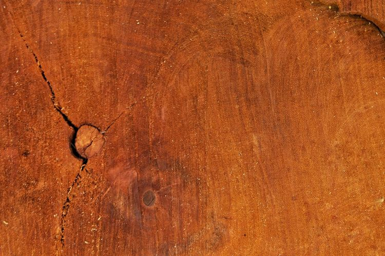 Wooden log Textured  Backgrounds Brown Close-up Outdoors Nature Retro Styled Space Empty Copy Space Wooden Log Wooden Wood Grain Pattern Abstract Material Blank
