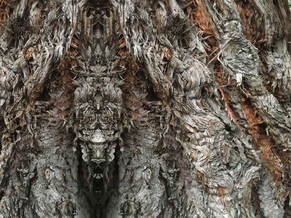 Druid Power Psy Psychedelic Spirit Spirituality Backgrounds Beauty In Nature Cave Close-up Day Druid Druid's Secret Place Forest Spirits Full Frame Nature No People Outdoors Pattern Psyart Psychedelicart Psychedelicdreams Rough Textured  Tree Tree Trunk