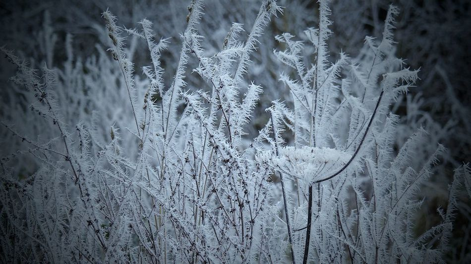 Frosty Spears Nature Cold Temperature Winter Ice Frosty Nature Frosty Pattern White Frost Frosty Grass
