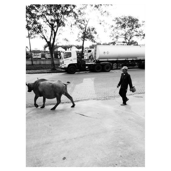 Only Men Domestic Animals Outdoors Farmer Sky Mobile Photography Indonesian Street (Mobile) Photographie Mobilephotography Indonesia_photography Black And White Photography